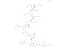 17年效果型抗菌肽技术沉淀  007抗菌肽火爆登场