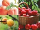 吃桃摘杏 怎样吃才营养